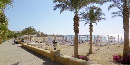 Strand med palmer i Sahl Hasheesh, Egypten.