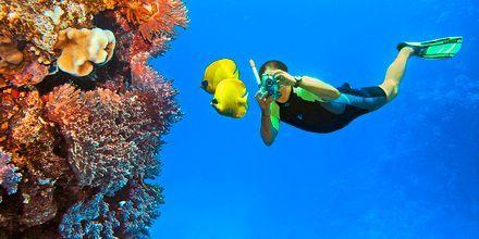 Fantastisk dykning i El Gouna, Egypten.