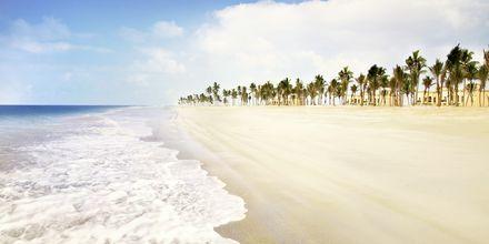 Stranden ved Salalah Rotana Resort, Oman