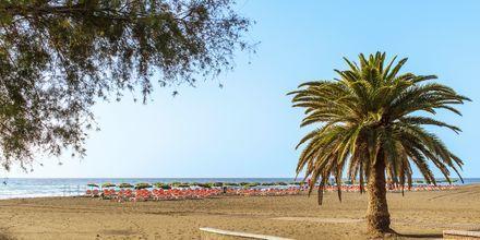 Stranden i San Agustin på Gran Canaria, De Kanariske Øer.
