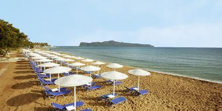 Stranden ved Santa Marina Beach i Agia Marina på Kreta, Grækenland