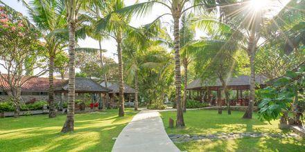 Have på Hotel Segara Village, Bali, Indonesien.