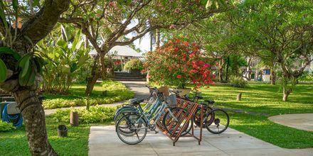 Lej cykel og udforsk omgivelserne på Bali.