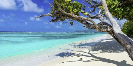 Der findes omkring 80 strande i Seychellerne. Her ser du Anse Source d'Argent på den stille ø La Digue.