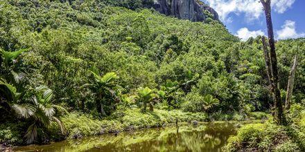 Nationalparken Morne Seychellois ligger på hovedøen Mahé og tilbyder smukke vandrestier.