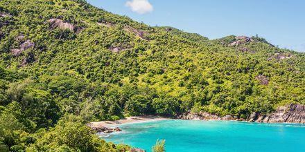 Bugten og stranden Anse Mayor i Seychellerne er billedskønne og rolige.