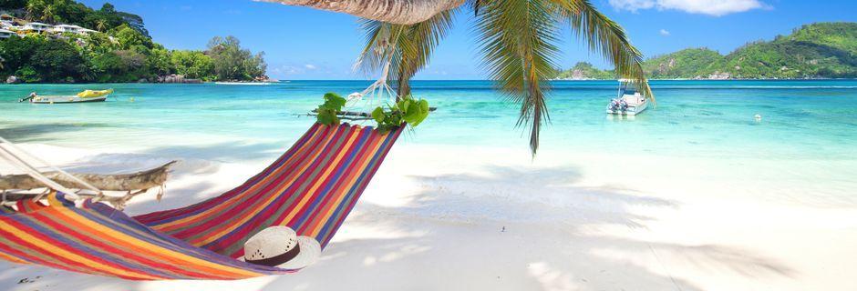 Afslapning, sol og skønne dyp i havet kan du nyde på din ferie i Seychellerne.