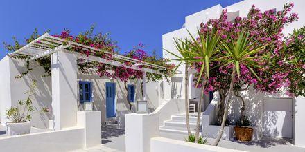 Hotel Sigalas på Santorini, Grækenland.