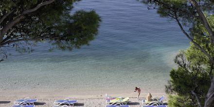 Stranden ved Hotel Simic i Makarska, Kroatien.