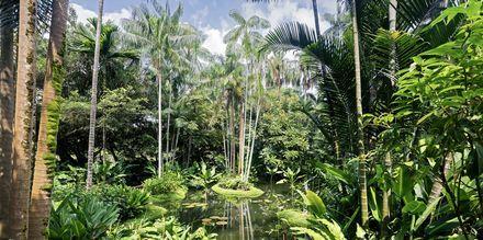 Singapores botaniske have er et must for planteinteresserede.