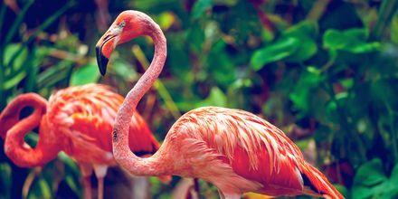Singapore Zoo er kendt verden over.