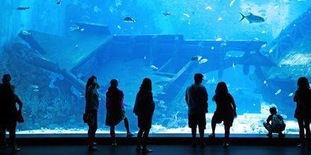 Marine Life Park er et vandmuseum og eventyrland på øen Sentosa i Singapore.