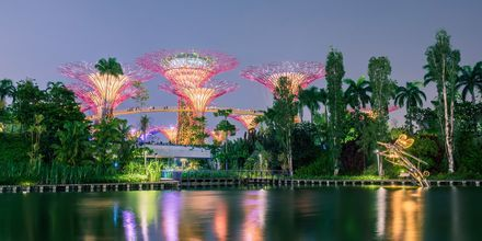 Garden by the Bay i Singapore om aftenen.