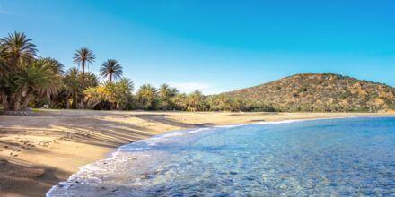 Vai-stranden, ca. 20 km nordøst for Sitia på Kreta i Grækenland.