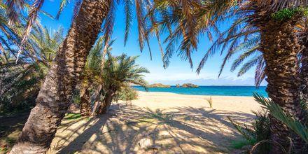 Vai-stranden ca. 20 km nordøst for Sitia på Kreta.