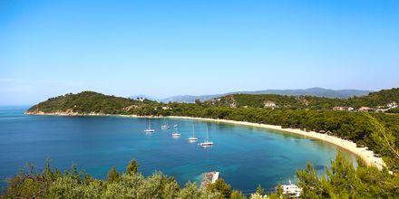 Koukounaries på Skiathos, Grækenland.