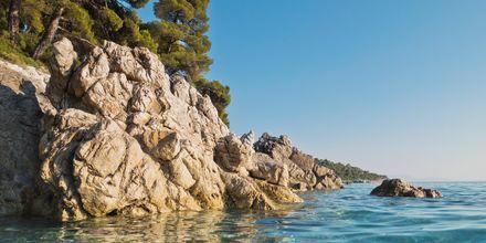 Kastani på Skopelos, Grækenland.