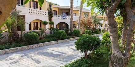 Hotel Sophia Beach i Platanias på Kreta, Grækenland.