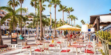 Café i Playa de las Americas på Tenerife, De Kanariske Øer.