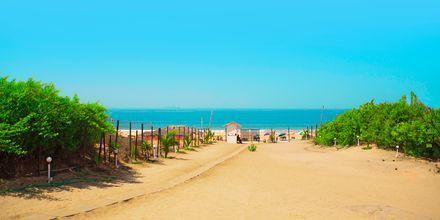 Stranden ved The O Hotel Goa, Indien