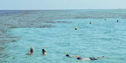 Snorkeltur i Det Røde Hav.