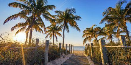 Nyd en skøn tur på en af de mange smukke paradis-strande i Florida, USA.