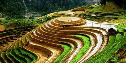 Rismarker i Vietnam.