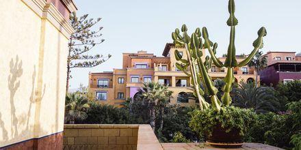Have på Villa Cortés i Playa de las Americas, Tenerife