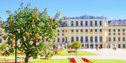 En anden ting er, at der er masser betagende bygninger og slotte i Wien. Her et glimt af Schönbrunn Slot.