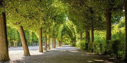 En smuk parksti i Wien, Østrig.