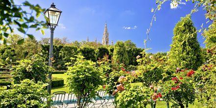 Halvdelen af Wien består af grønne områder.