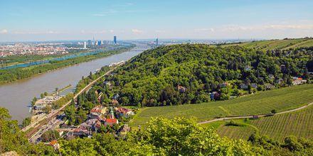 Nær Wien finder du 11 vandrestier. Her fra Leopoldsberg med den mest fantastiske udsigt over byen.